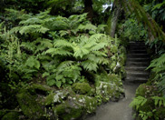 May News from The Lost Gardens of Heligan