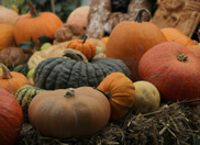 Autumnal Delights at Heligan